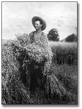 Photographie : William Elsley in field with harvest, [vers 1910]