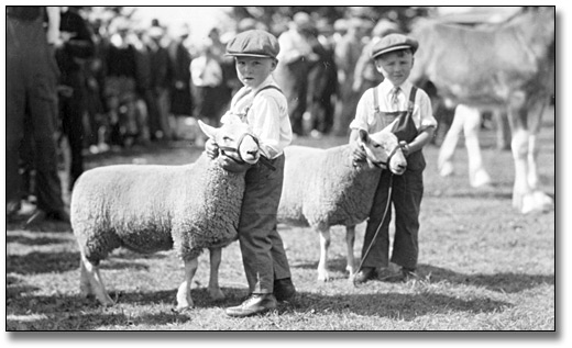 Photographie : Boyd and Lloyd Ayre Hampton (twins) exhibiting twin southdowns, Jr. Section, Oshawa, 1930