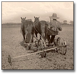 Photographie : Planting with a dual seeding machine, 1919
