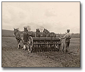 Photographie : Sowing spring wheat, 1919