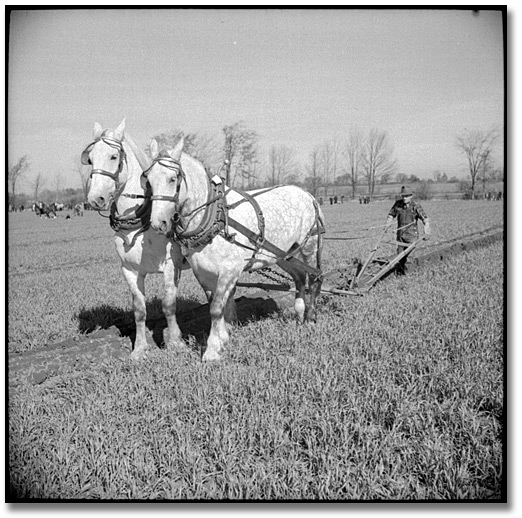 Photographie : Man ploughing with horses at the International Ploughing Match, 1941