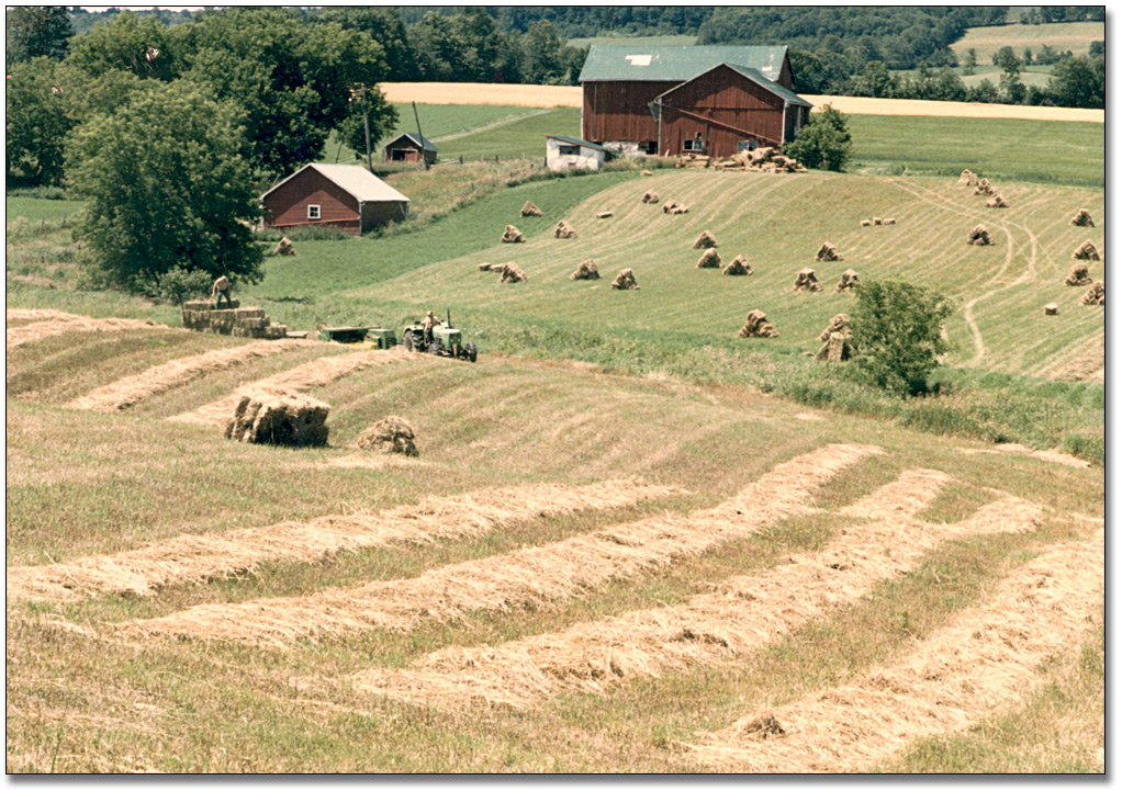 Photographie : Farmer harvesting hay, 1985