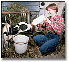 Photographie : Woman bottle feeding a newly born calf, Kitchener, 22 mars 1983