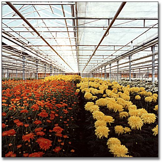 Photographie : Flower greenhouse, 20 octobre 1977