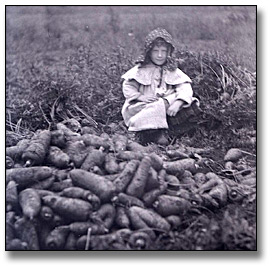 Photographie : Girl with carrot harvest, Clarkson, 1910
