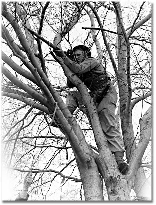 8796_man_in_tree_520.jpg
