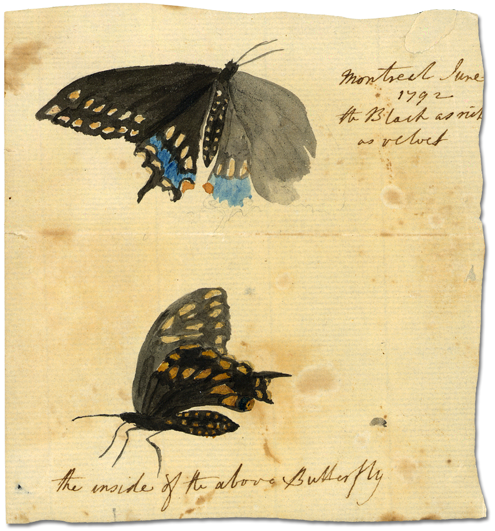 Aquarelle : Montreal, juin 1792 [the Black as rich as velvet; the inside of the above butterfly]